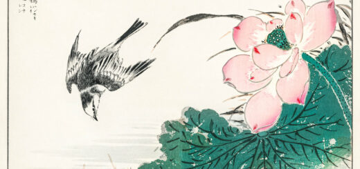 Japanese Pied Wagtail and Red Lotus illustration from Pictorial Monograph of Birds (1885) by Numata Kashu (1838-1901).